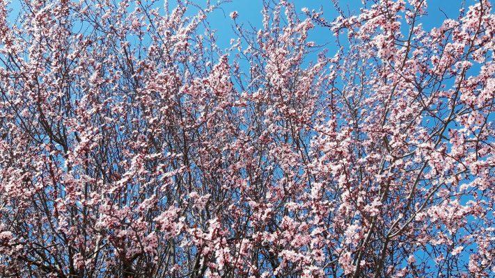 elena-martorella-fiori